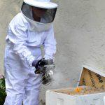 Smoking a beehive
