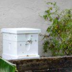 beehive box